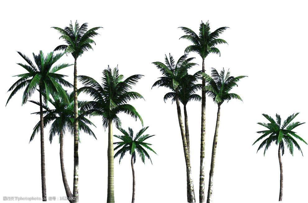 椰子树分层素材图片word中如何绘制黑点图片